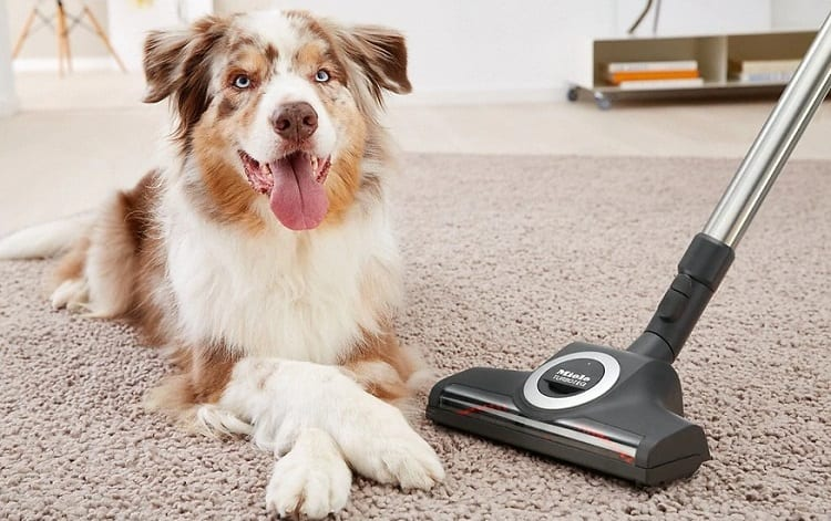 vacuum cleaner and dog on carpet