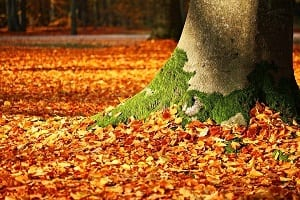dealing with autumn leaves in garden