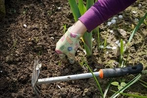 keep your garden neat and tidy