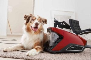 Best Vacuum For Pet Hair 2020: Top 5 UK Models