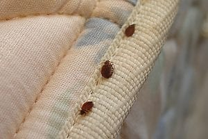 Can You Get Rid Of Bed Bugs By Vacuuming